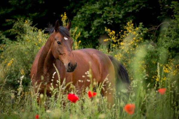 blaehbauch-beim-pferd