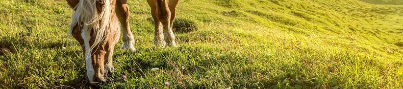 Kräuter für das Pferd