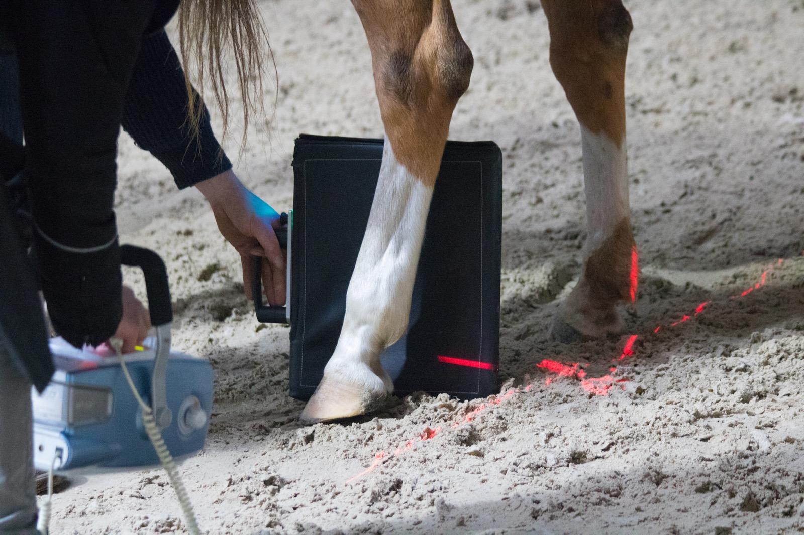 griffelbeinfraktur wie sind die heilungschancen des pferdes. Black Bedroom Furniture Sets. Home Design Ideas