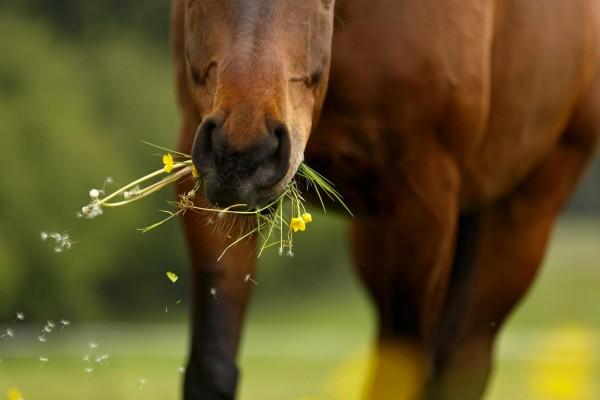 entgiftung-beim-pferd