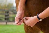 Pferde impfen