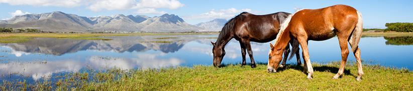 Vom Magen bis in den Dickdarm – der Verdauungstrakt als Wiege der Gesundheit beim Pferd
