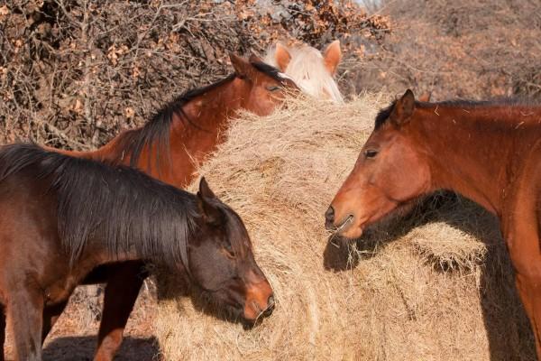 grundversorgung-beim-pferd