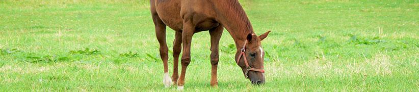 Pferdefutter für alte Pferde