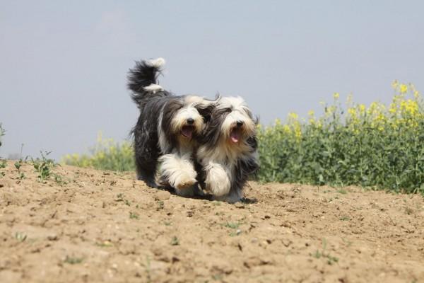 giardien-beim-hund-expertentipp-masterdog