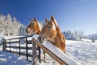Pferde richtig eindecken