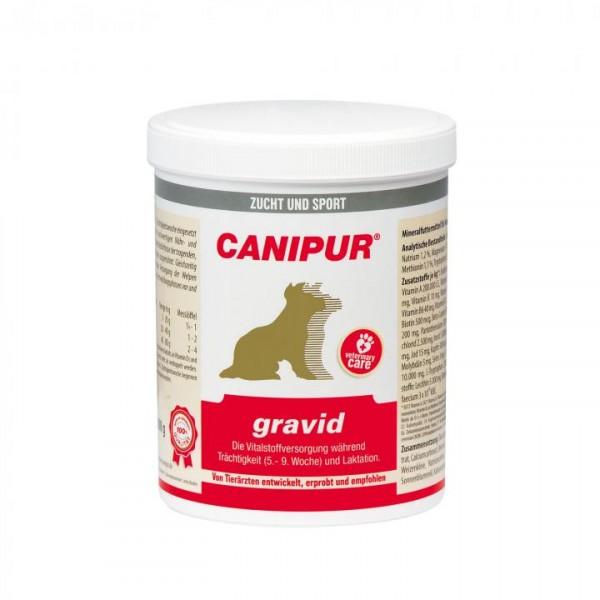CANIPUR-gravid