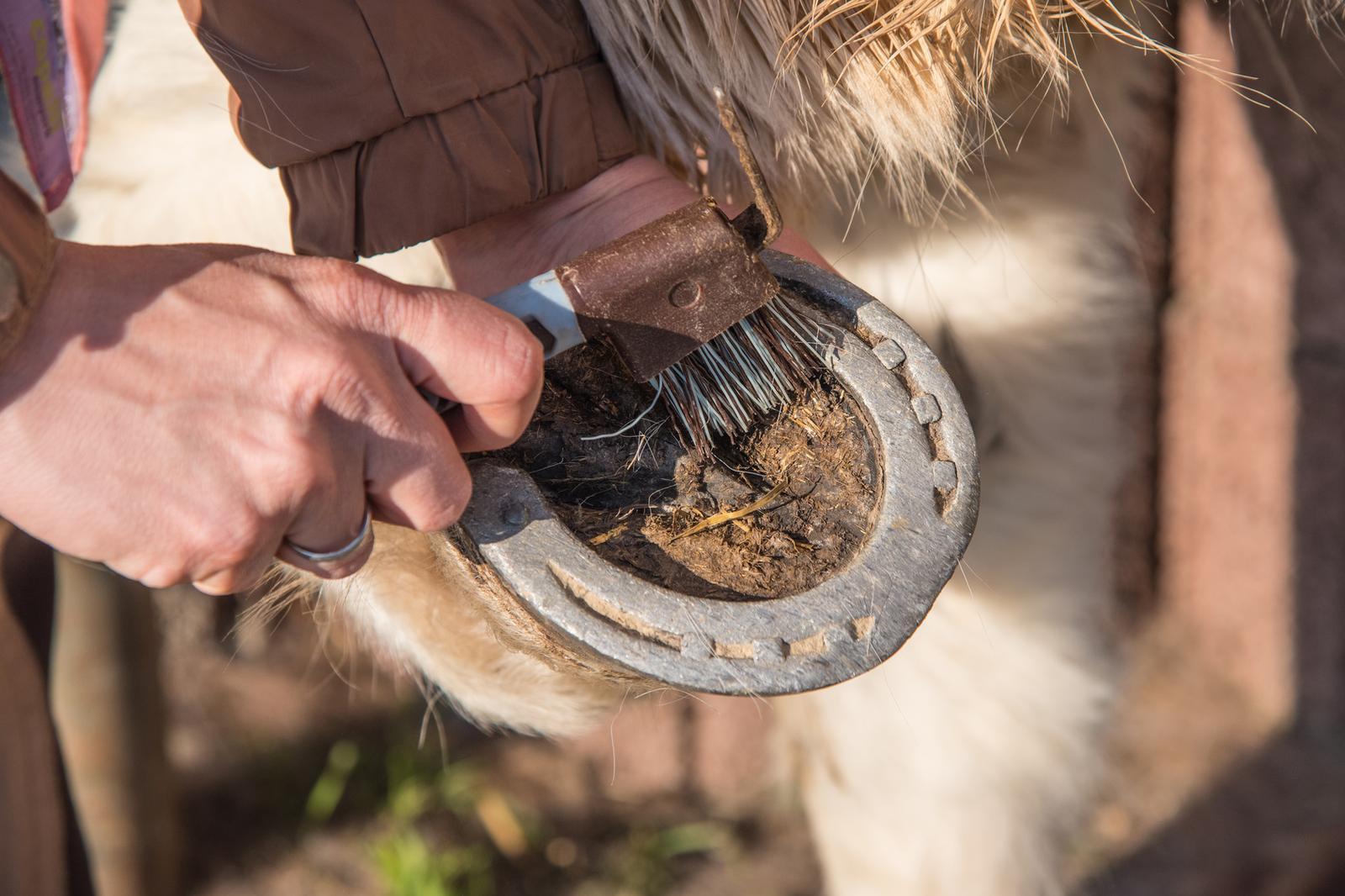 Strahlfäule beim Pferd vorbeugen