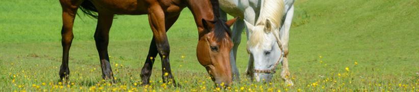 Den Entgiftungsstoffwechsel beim Pferd optimieren – Leber & Niere