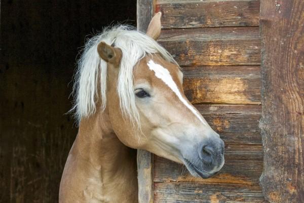 mangan-pferdefuetterung