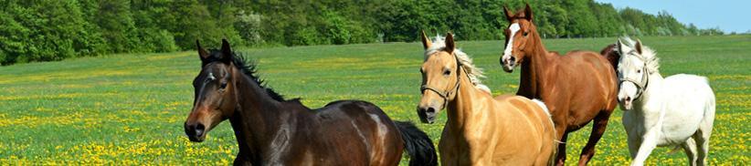 Mit natürlichen Kräutern den Stoffwechsel Ihres Pferdes wieder ins Gleichgewicht bringen.