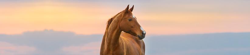 Der richtige Futterzusatz bei Pferden mit Angst, Panik oder Stress
