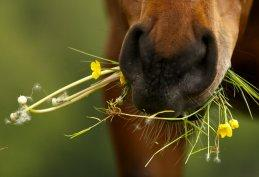 pferd_kraeuter_gesundheit_lp