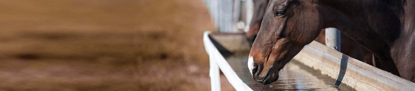 Nieren beim Pferd mit Kräutern entschlacken